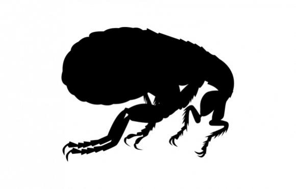 Pest Free Professional